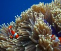 Snorkeling Dan Diving Di Pulau Menjangan