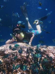 pulau karimunjawa, taman nasional karimunjawa, paket karimunjawa, karimunjawa tour murah, karimunjawa resort, wisata karimunjawa